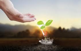 защиты растений 2 - Средства защиты растений 2